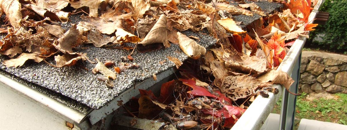 Sacramento Leaf Guards Amp Rain Gutters All About Gutters